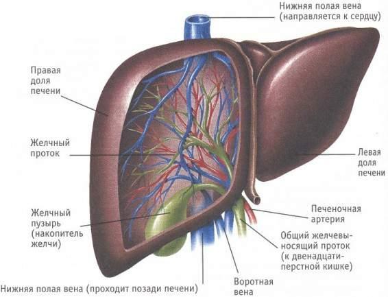 народные способы очищения кишечника