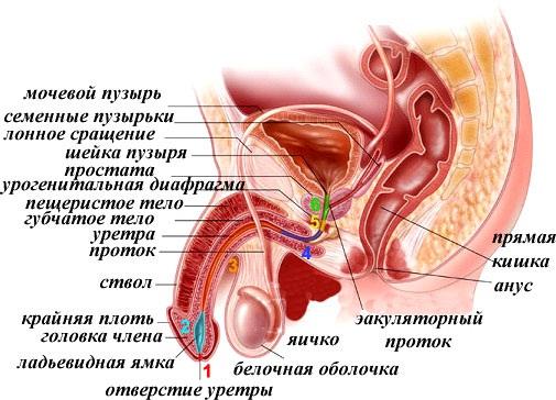 Ліки від аденоми простати
